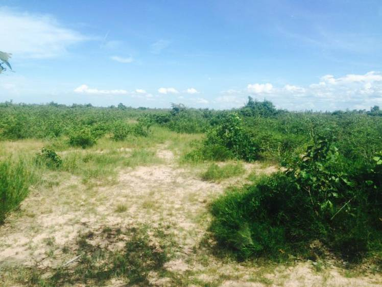 land Residential for rent in Khsem Khsant ID 27461 1
