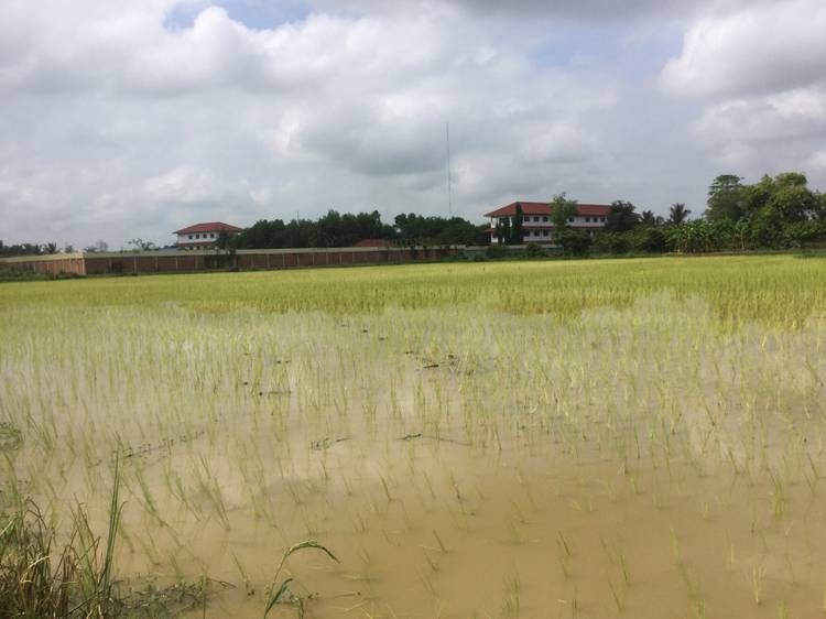 land Residential for rent in Rottanak ID 28219 1