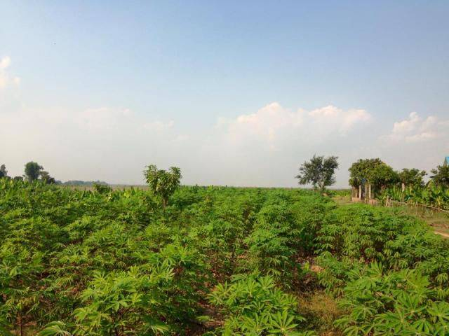 land Residential for rent in Chheu Teal ID 41196 1