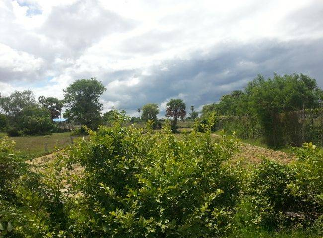 land Residential for sale in Prey Veng ID 16861 1